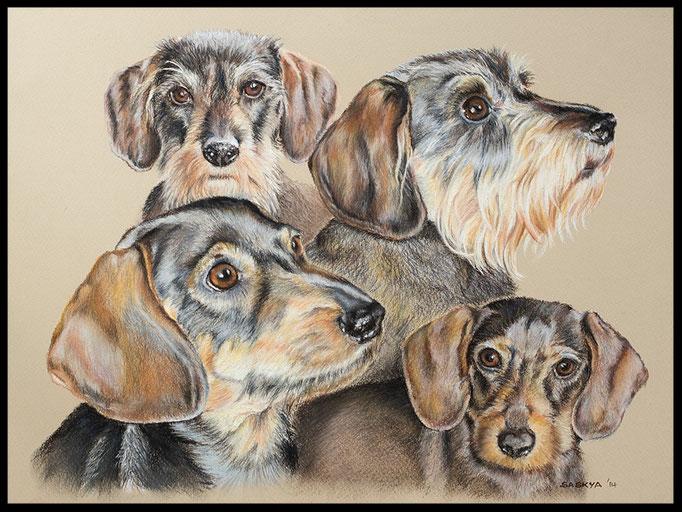 Hundezeichnung, Tierzeichnung, Hundemalerei, Tiermalerei, Dackel, Hundeportrait, Zeichnung, Pastellzeichnung