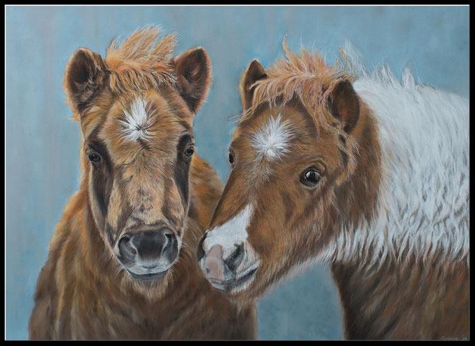 Tierzeichnung, Pferdezeichnung, Pferdeportrait Shetland Fohlen, Pastellzeichnung, pet portrait