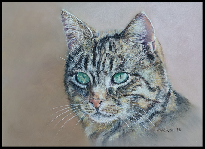 Katzenzeichnung, Tierzeichnung, Tiermalerei, Katzenmalerei, Tigerkatze, Katzenportrait, Zeichnung, Pastellzeichnung