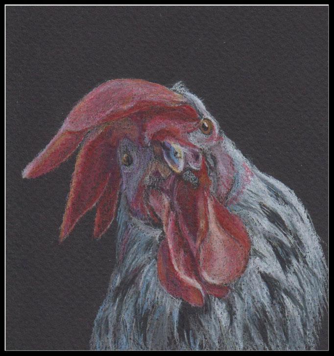 Tierzeichnung, Tier, Zeichnung, Hahn, Farbstift Zeichnung, coloured pencil drawing