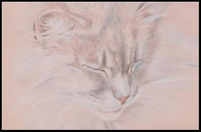 Katzenzeichnung, Katze, Zeichnung, Katzenportrait, Tierzeichnung