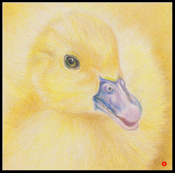 Tierzeichnung, Tier, Zeichnung,Gänseküken, Farbstift