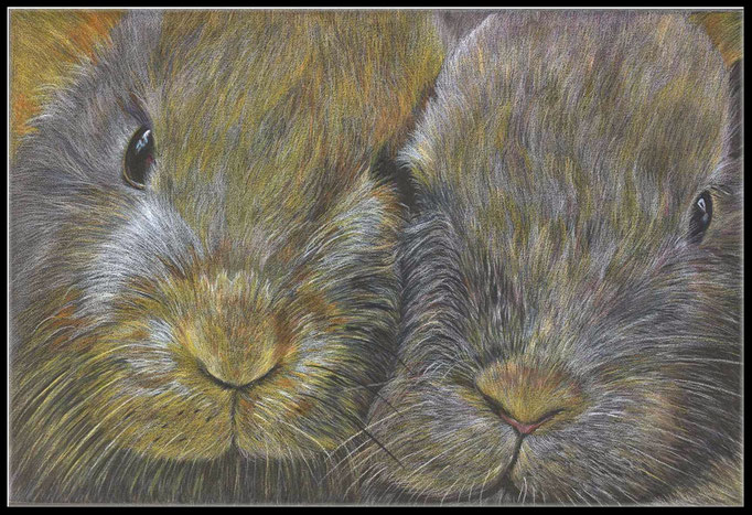 Tierzeichnung, Tier, Zeichnung, Kaninchen,  Farbstift Zeichnung, coloured pencil drawing