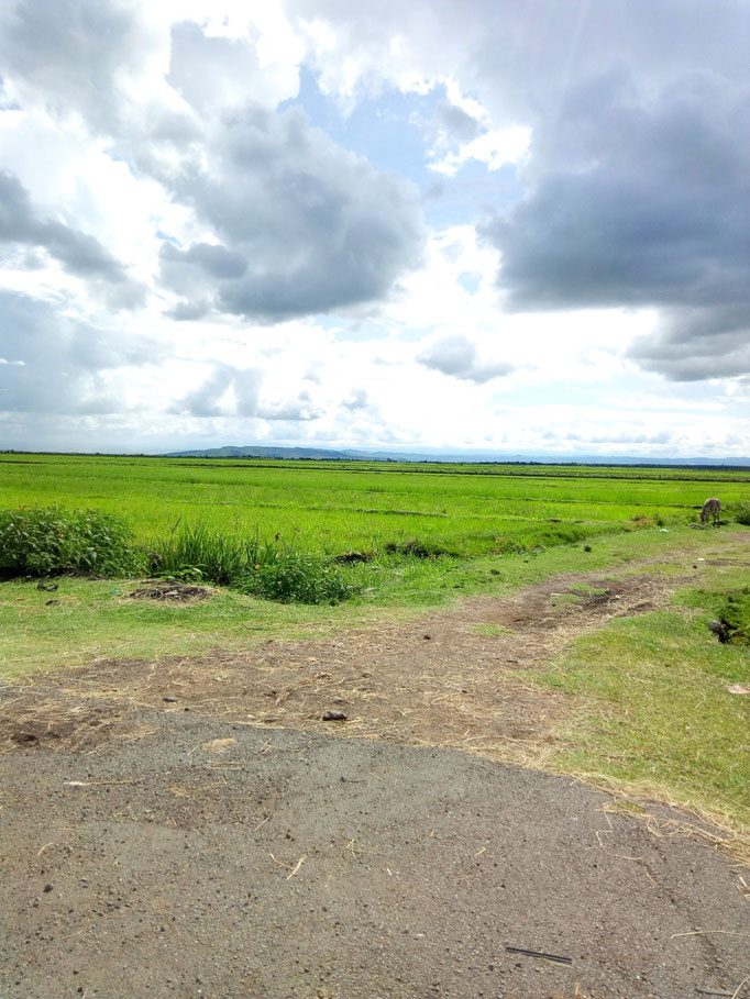 Stunning view over rice fields on the way to Embu