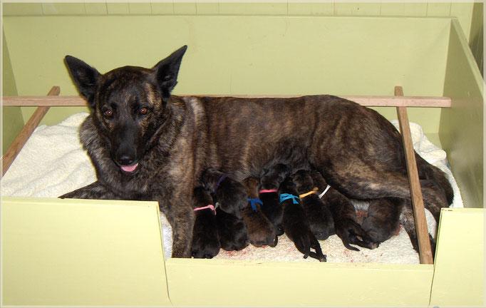 21 juni 2009 Dido met haar eerste nest. Ons E-nest 5 reuen en 5 teven