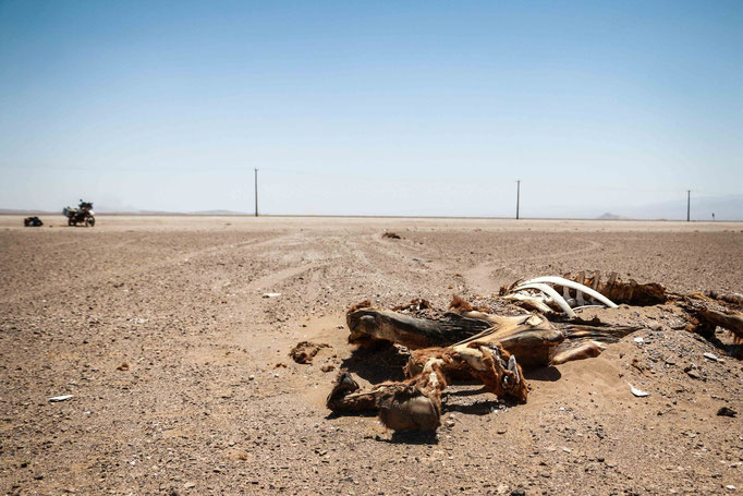 wo Kamele austrocknen läuft die Tenere ohne Probleme weiter