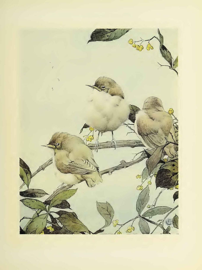 The Book of baby bird by E.J Detmold