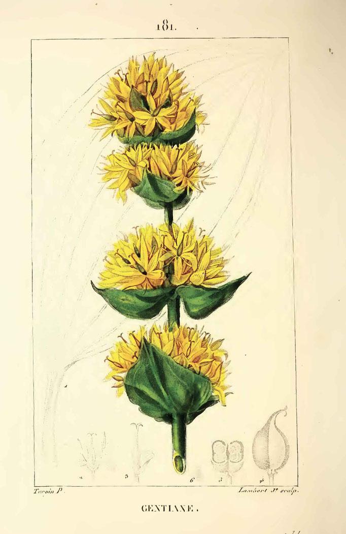 Flore médicale par MMhaumeton, Poiret, Chamberet, 1833