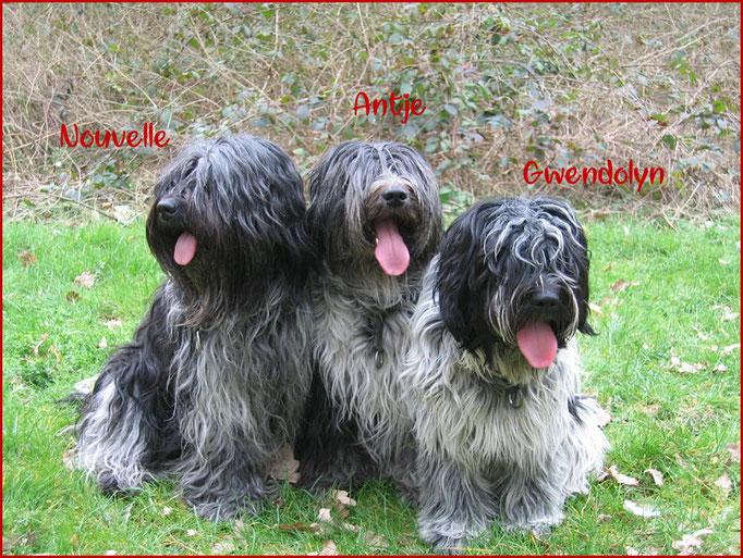 Mein Dreiergespann: Nouvelle, Antje und Gwenny