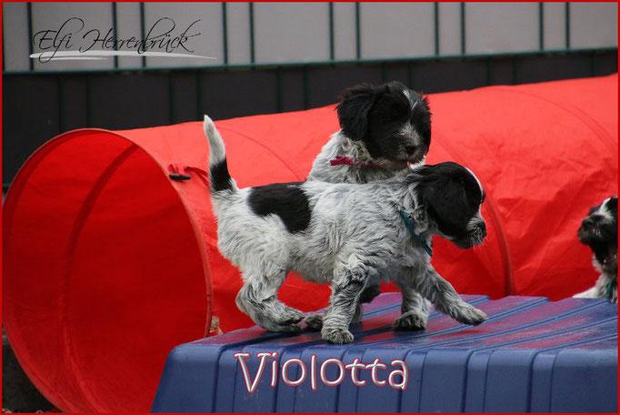 Libertin's Violotta