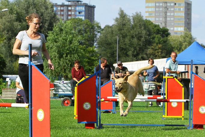 Agility Hondenschool Rotterdam USV-VOP