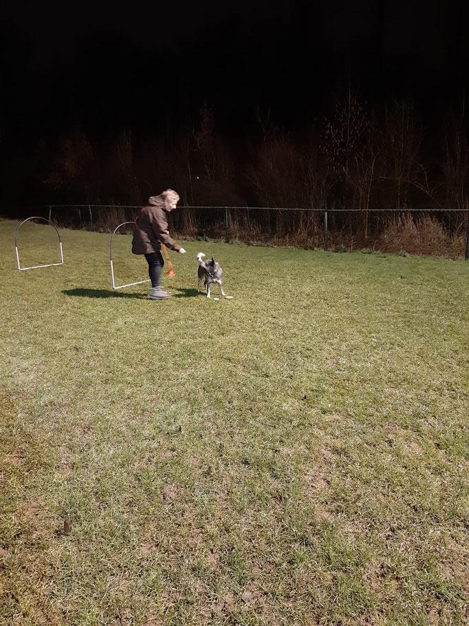 Hondenschool Rotterdam Usv-Vop Hoopers