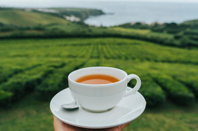 Azores - Cha Gorreana in Sao Miguel Island - Copyright  HeadSpinPhoto