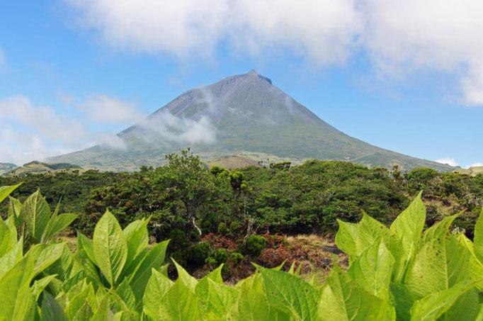 Azores - Pico Island - copyright Robert van der Schoot 2