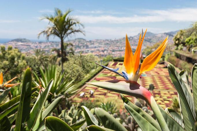 Madeira copyright T.W. van Urk