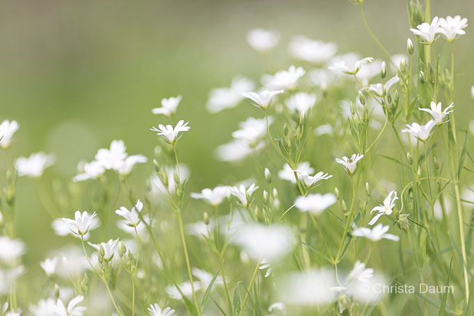 FrühlingsLeicht