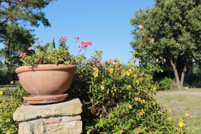 giugno: iperico in fiore