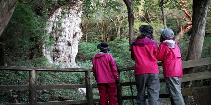縄文杉の前で、朝焼けを待つ