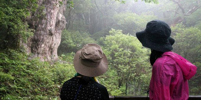 霧の立ち込める森で