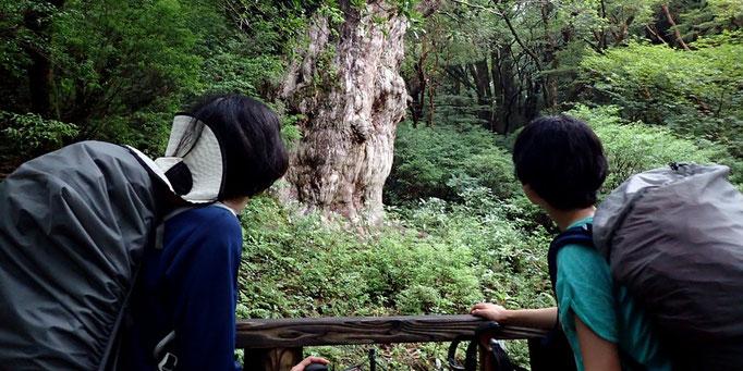 縄文杉とゆっくりと向き合う