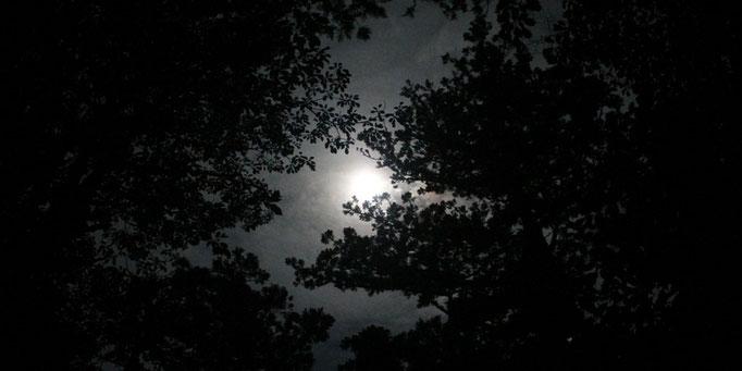 月明かりが森を照らす