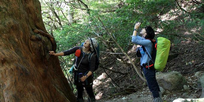 屋久島の巨木を見て