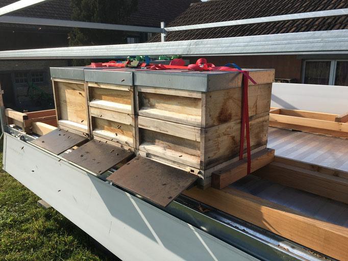Am neuen Standort müssen sich die Bienen erst mal einfliegen und neu orientieren.