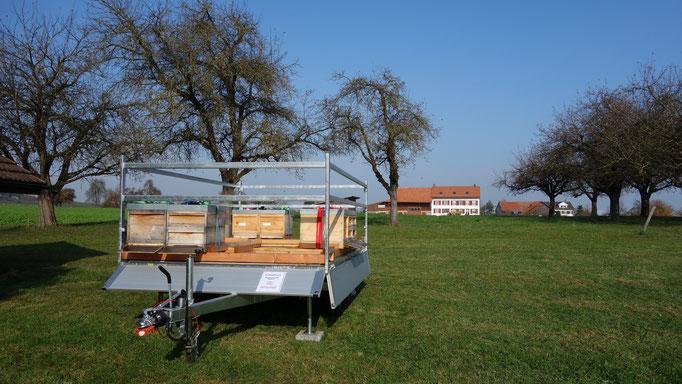 Standort in Amlikon-Bissegg. Hier werden im Frühling die Hochstamm Apfelbäume bestäubt.