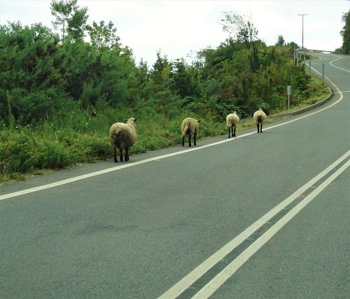 Ob die auch nach Puerto Montt wollen?