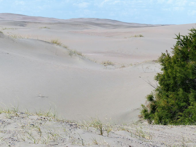 Die Dünen werden immer grösser....
