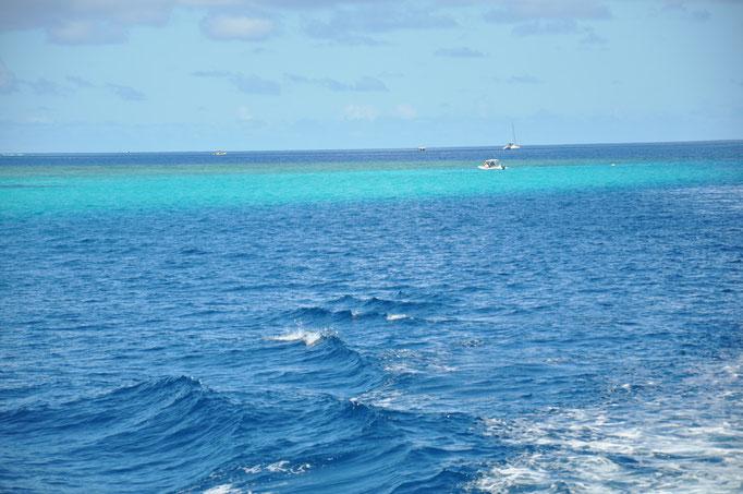 palette de couleurs, barrière de corail