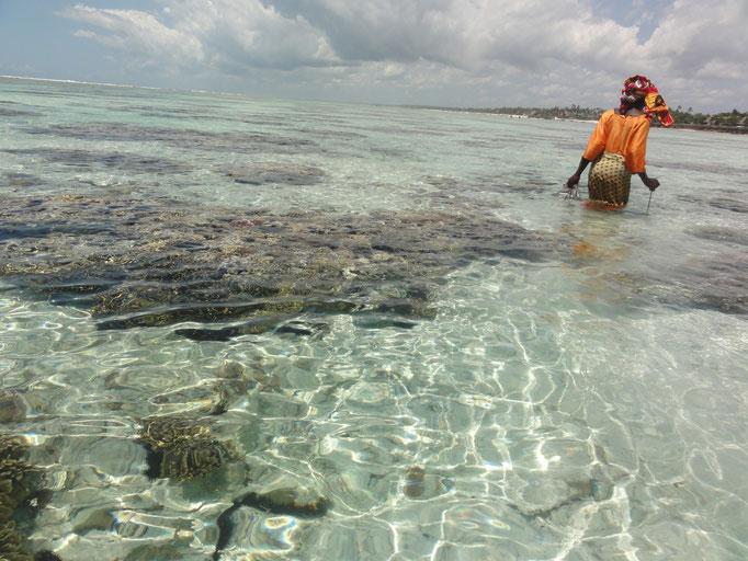 pêcheuse de poulpe