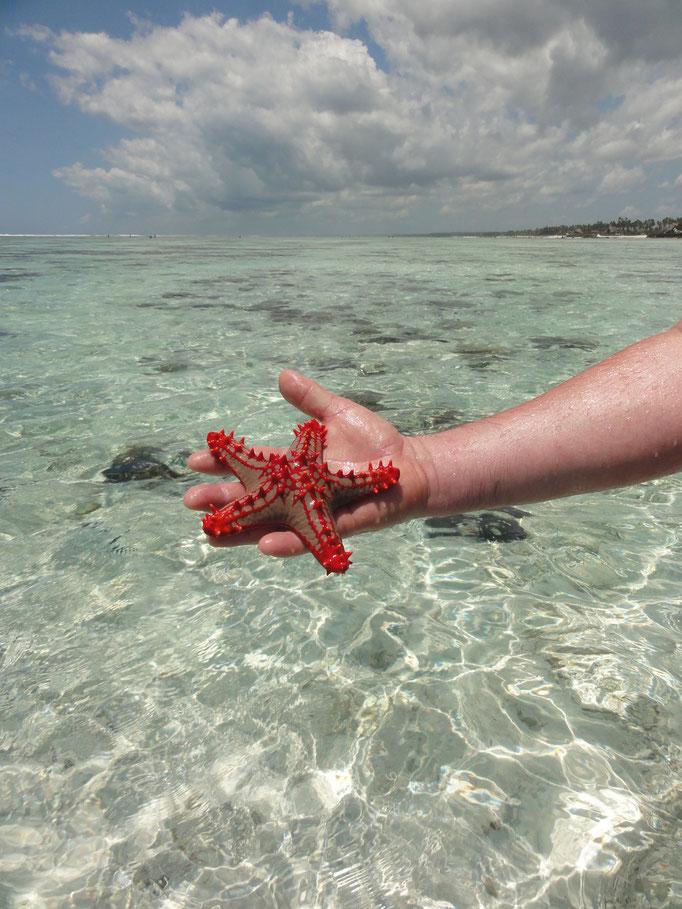 magnifique étoile de mer rouge