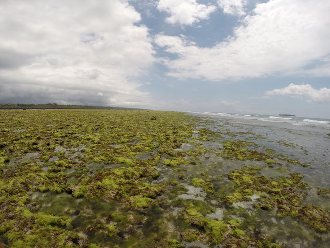 la barrière de corail - un paysage lunaire!
