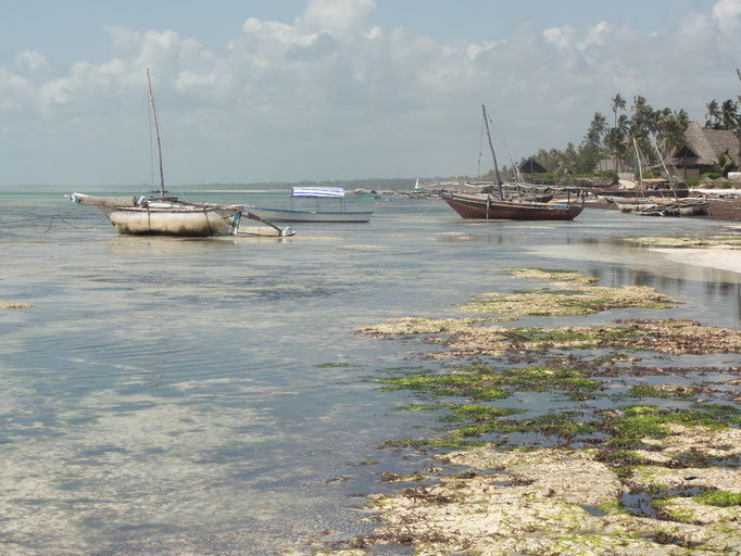 la marée est très basse
