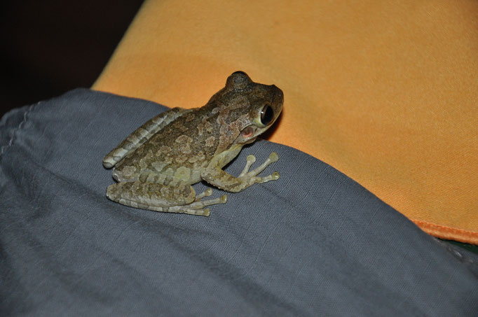 visite d'une curieuse sur notre balcon