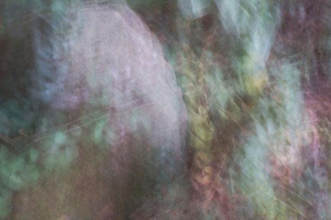 Epiderme de pierre, photographie numérique, 2017