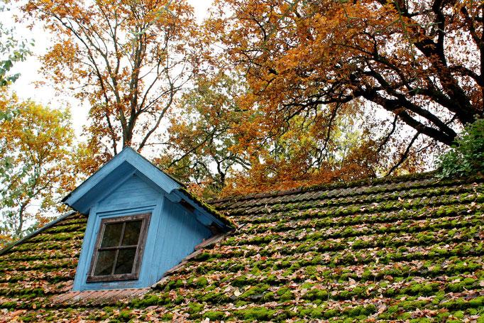 Herbst im Wendland