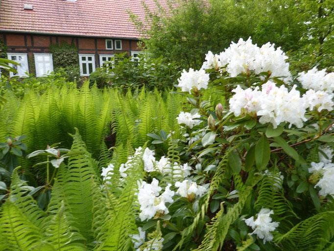 Blütenpracht im Wendland