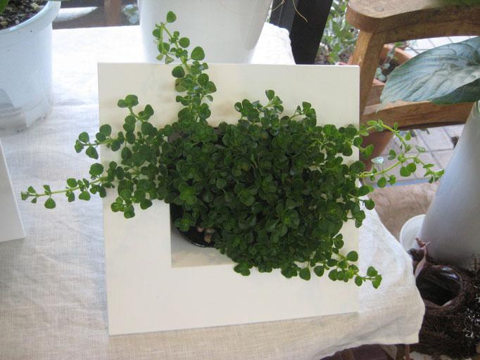 額縁タイプ観葉植物