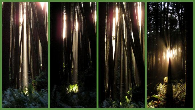 die untergehende Sonne zwängt sich durch die Bäume