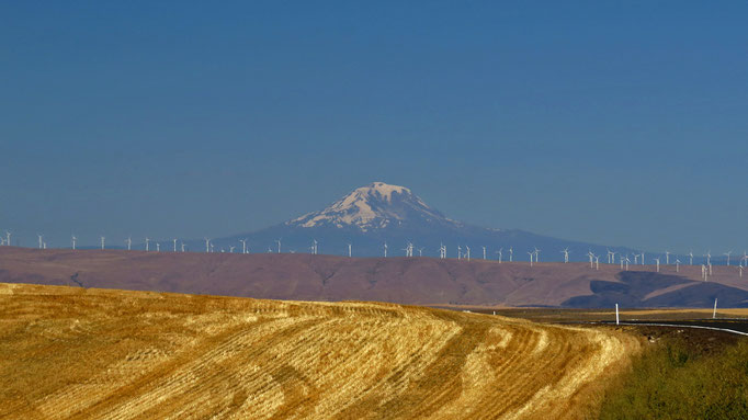 Mt Adams (denke ich)