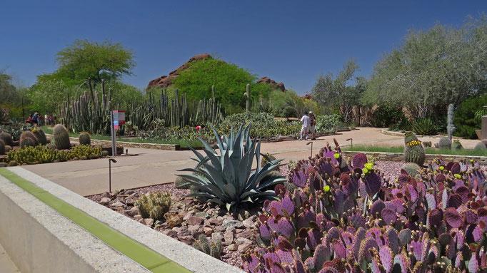 im Botanischen Garten / at the Desert Botanical Garden