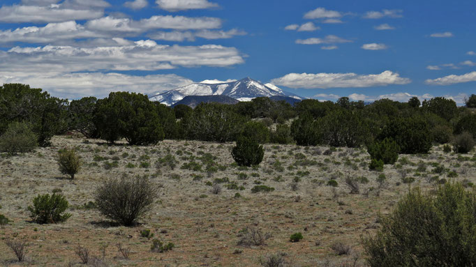 in der Ferne die frisch verschneiten San Francisco Peaks von Flagstaff / far away the San Francisco Peaks of Flagstaff