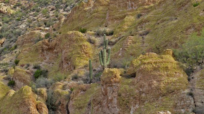 weiter geht es auf dem Apache Trail / further along the Apache Trail