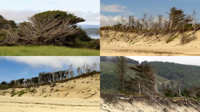 da sieht man schnell woher der Wind weht...