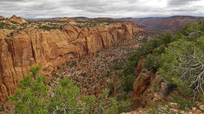 Betatakin Canyon