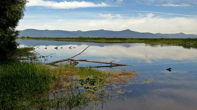 """die wiederhergestellten """"Wood River Wetlands"""""""