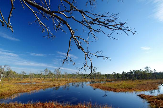 Viru raba Hochmoor, Lahemaa Nationalpark, Estland