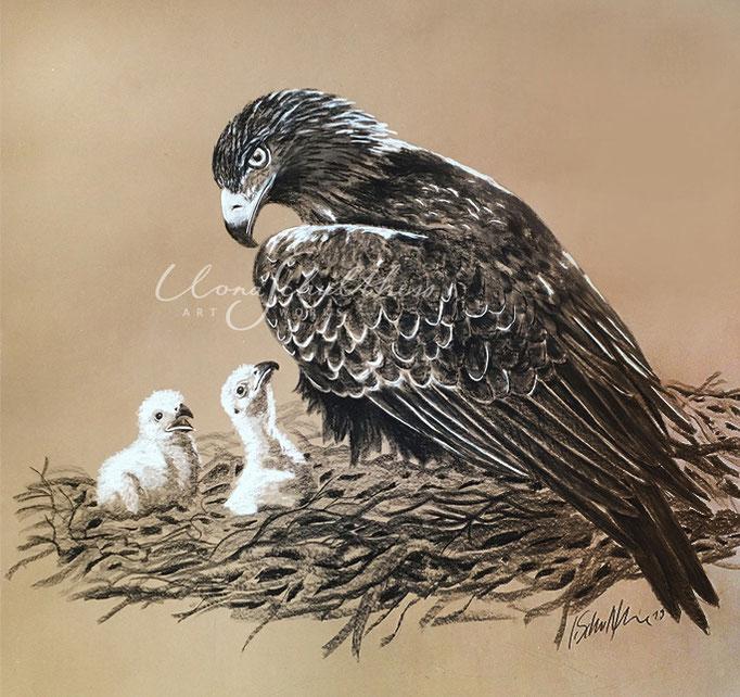 Adler im Nest 2019